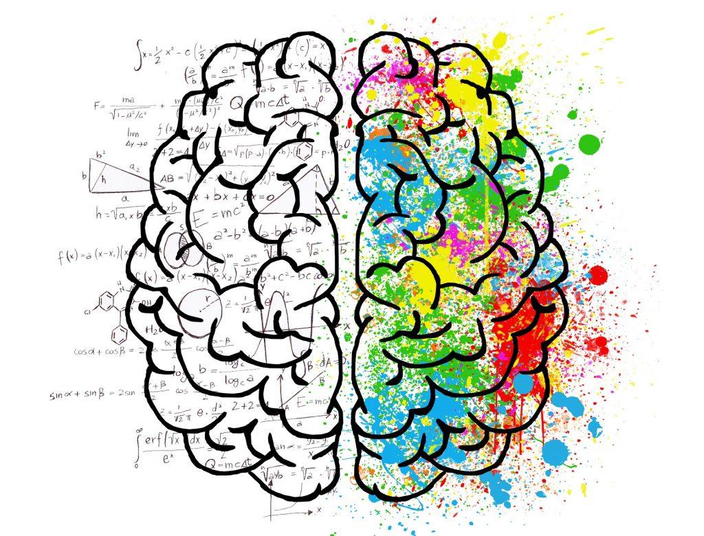 Resultado de imagen para nutricion yh cerebro