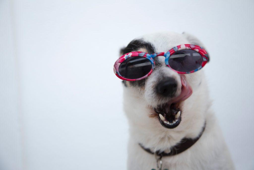 perritos rayos UV1
